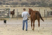 Equine Therapy at Arivaca